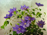 Clematis (with silver leaf)
