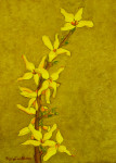 Study of Forsythia