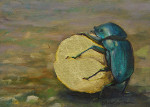 Let Go (Dung Beetle)