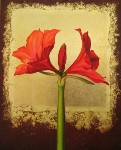 Red Amaryllis on Gold