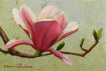 Single Magnolia on Silver