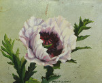 White Poppy on Silver