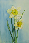 Study for Daffodil Couple