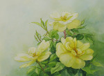 Three Yellow Roses
